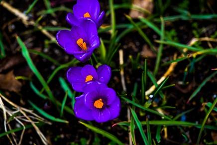 spring flowers-7 copy